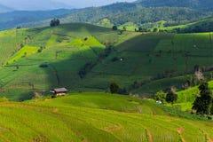 Riso di punto delle colline della montagna che coltiva agricoltura Immagine Stock Libera da Diritti
