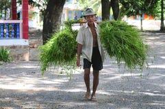 Riso di trasporto dell'agricoltore di nuovo a casa Immagini Stock
