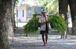 Riso di trasporto dell'agricoltore di nuovo a casa Fotografia Stock Libera da Diritti