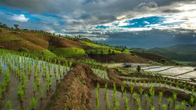 Riso Paddy Field Landscape Mountain fotografia stock