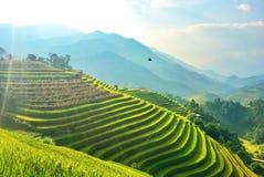 Riso refiled, Vietnam Fotografia Stock Libera da Diritti