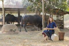 Riso tailandese della vagliatura della ragazza separato fra riso e la buccia del riso sul fondo dell'azienda agricola Immagini Stock Libere da Diritti