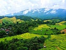 Riso tailandese Paddy Field immagine stock