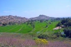 Riso-Terra-e-montagne Fotografia Stock