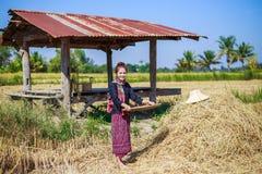Riso trebbiato donna dell'agricoltore nel campo Immagine Stock