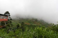Risodling i bergen på Kandy i Sri Lanka Arkivfoton