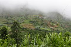 Risodling i bergen på Kandy i Sri Lanka Arkivbild