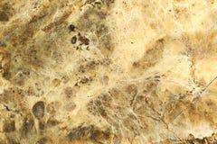 Risomorphs della putrefazione a secco su superficie di legno fotografie stock