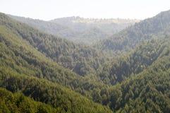 Risorse forestali della Serbia Immagine Stock Libera da Diritti