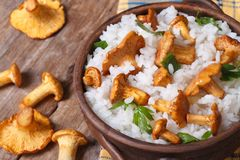 Risotto with chanterelle mushrooms in a bowl close-up  view top Stock Image