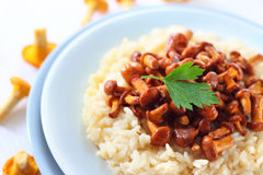 Risotto with chanterelles. Risotto with fried chanterelles on a plate stock photo