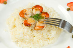 Risotto with grilled scallops Stock Photography