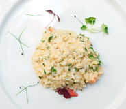 Risotto with lobster on plate Stock Photos
