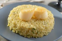 Risotto with scallops Royalty Free Stock Photos