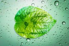 Risparmi verdi di concetto dell'ambiente della foglia la terra Fotografia Stock Libera da Diritti