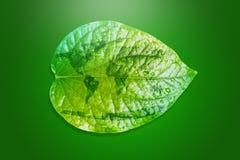 Risparmi verdi di concetto dell'ambiente della foglia la terra Immagini Stock Libere da Diritti