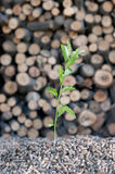 Risparmiare l'energia di Natura-alternativa Immagini Stock