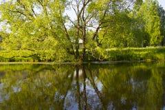 Rispecchiandosi di grande albero nell'acqua del lago Fotografie Stock
