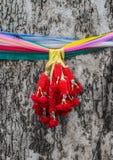 Rispettivo della Tailandia per il grande vecchio albero Fotografia Stock Libera da Diritti