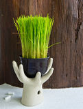 Risplantor Arkivfoto