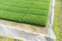 Risplantor arkivbilder