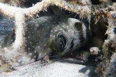 risque la Mer Rouge Image libre de droits