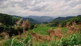 Rissóis do arroz com as montanhas no fundo Foto de Stock