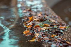 Risse des Herbstes Stockfotografie