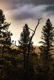 Risse vom Himmel lizenzfreies stockfoto