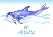 Risso's Dolphin. Hand drawn vector watercolor illustration. Stock Image