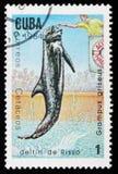 Rissos Delphin (Butzkopf griseus), circa 1984 Lizenzfreie Stockbilder