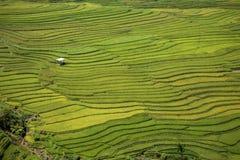 Risterrass i Vietnam Arkivbild