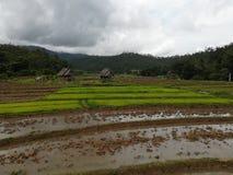 Risterrass, norr Thailand, Pai royaltyfri bild