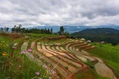 Risterrass på Chiang Mai royaltyfri bild