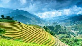 Risterrasser i Mu Cang Chai, Vietnam Arkivbild