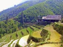 Risterrasser i norr Vietnam Arkivbilder