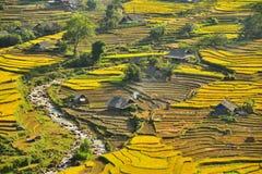 Risterrasser i Sapa, Vietnam Arkivbild