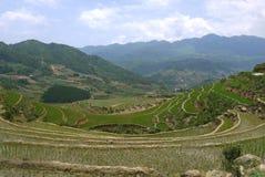 Risterrasser i Sapa, Vietnam Fotografering för Bildbyråer