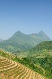 Risterrasser i Vietnam Arkivbilder