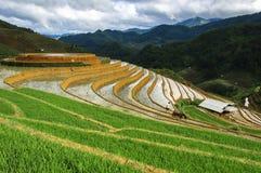 Risterrasser i Vietnam Arkivbild