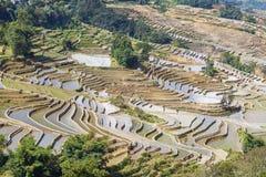Risterrasser i Yuanyang, Kina Arkivbild