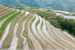 Risterrasser på Longsheng, Kina arkivbilder