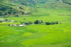 Risterrassfält i den Rainning säsongen på Tule Royaltyfria Bilder