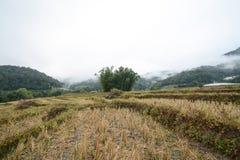 Risterrassfält i Mae Klang Luang, Chiang Mai, Thailand Arkivbilder