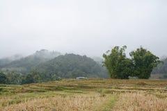 Risterrassfält i Mae Klang Luang, Chiang Mai, Thailand Royaltyfri Foto