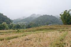 Risterrassfält i Mae Klang Luang, Chiang Mai, Thailand Royaltyfria Foton