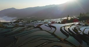 Risterrasslandskap med vatten-fyllda risfält arkivfilmer
