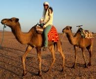 Rit op kameel Stock Afbeeldingen