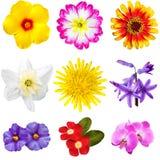 Ritagli variopinti dei fiori Fotografia Stock Libera da Diritti