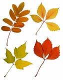 Ritaglio dei fogli di autunno Fotografia Stock